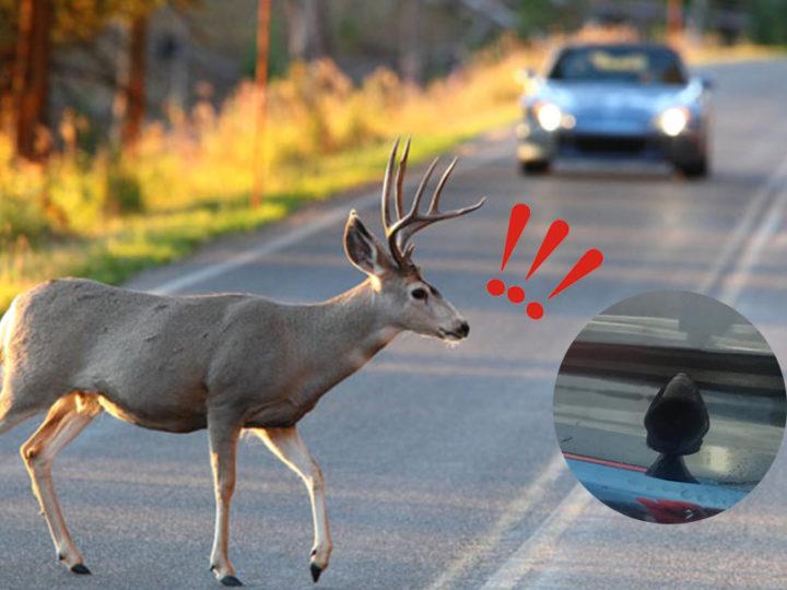The Effectiveness of Deer Whistles